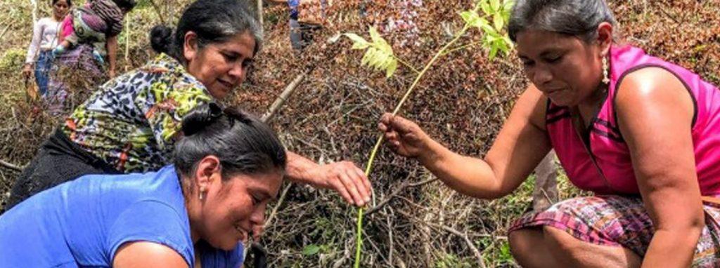PORTADA ENFRENTANDO CAMBIO CLIMATICO EN EL ALTIPLANO OCCIDENTAL
